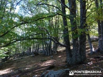 El Castañar de El Tiemblo , Un bosque mágico;club montañismo madrid;licencia montaña 2015